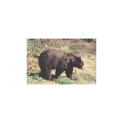 TrueLife - Medve lőlap