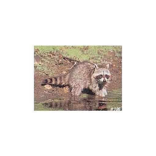 True Life - Raccoon