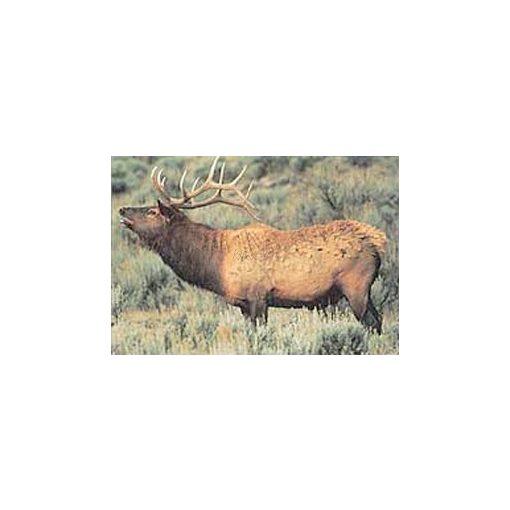 True Life - Deer