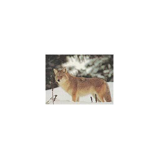 True Life - Wolf